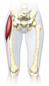 大腿筋膜脹筋